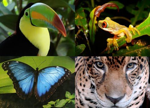 Image result for amazon rainforest animals and plants