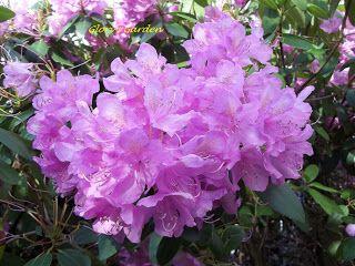 Glory's Garden: Fleeting is the Flower