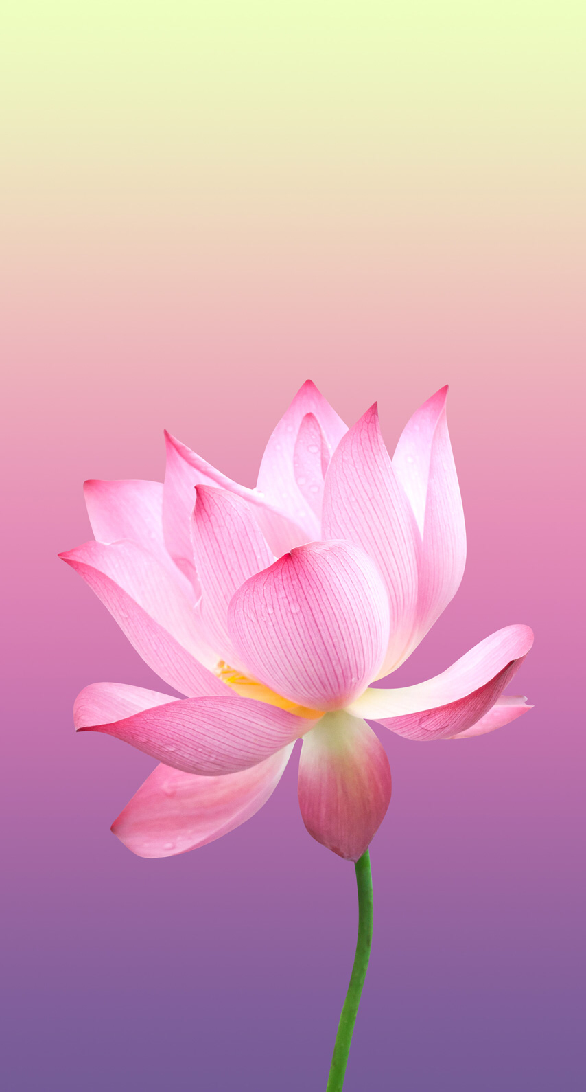 Pin by Asmaa usama on asana Wallpaper nature flowers