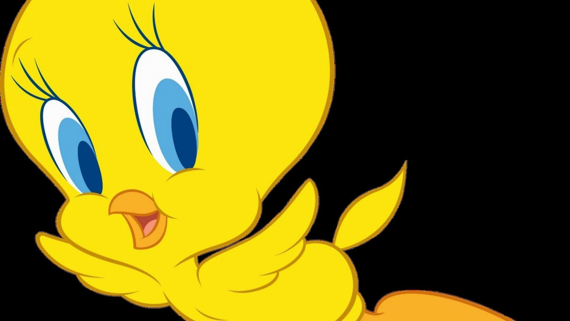 tweety hd images get free top quality tweety hd images for your desktop pc background