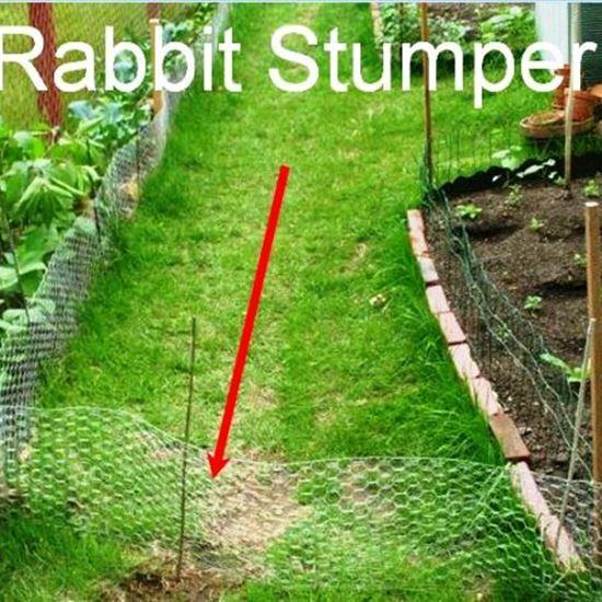 Garden Pest Management With Images Garden Pests Garden Pest