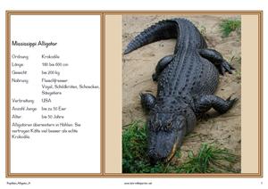 Wissensspiele Reptilien