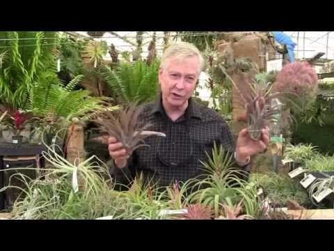 Paul Isley Rainforest Flora Inc Tilly Talks Various