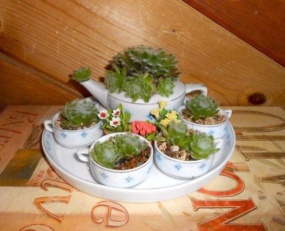 Tea Cup & Miniature Tea Sets with Succulent Plants Planted in them...great idea!