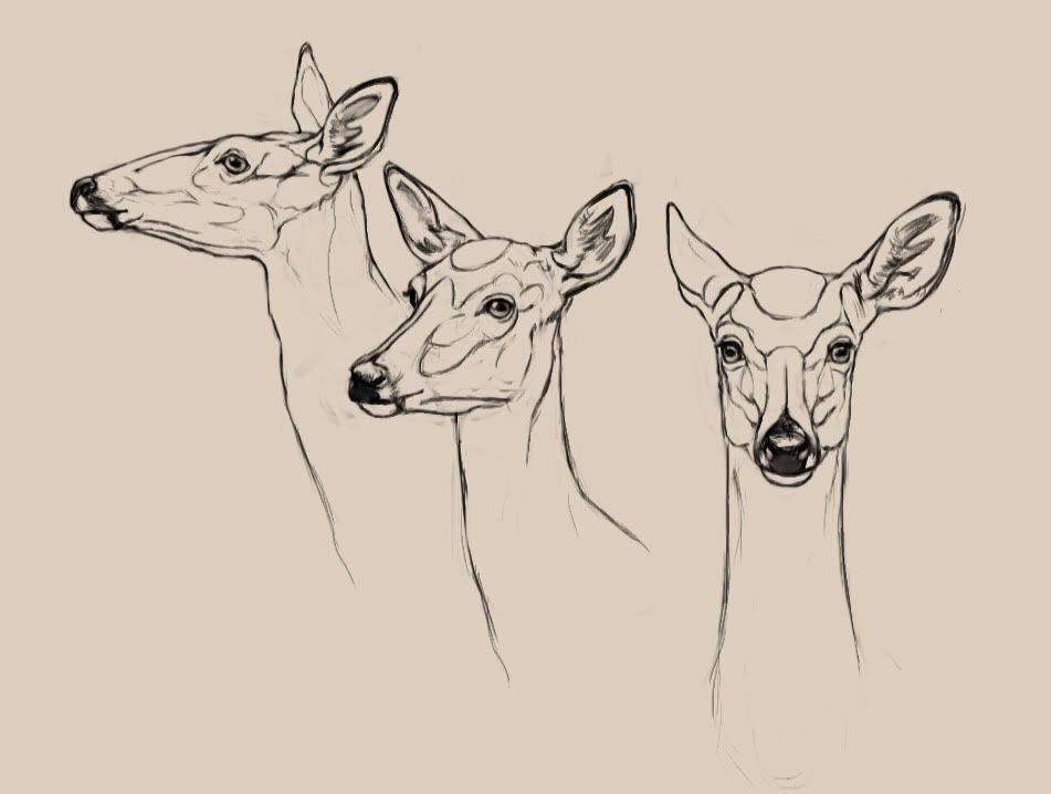 Lets Draw Deer The Endless Forest Drawings Sketches