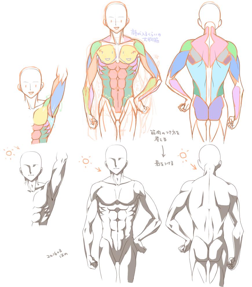 los músculos del cuerpo superior Irarepo | Palmie (Parumi) | Human ...