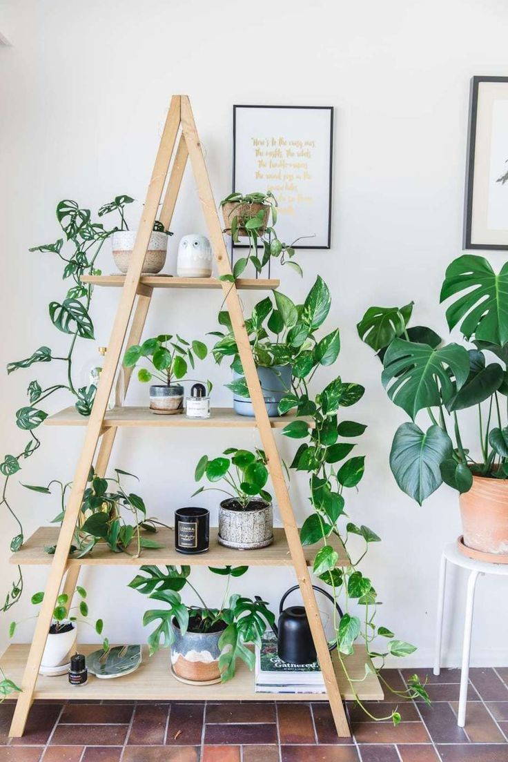 10 Tips for Plant Aesthetic in Small Space Decorating
