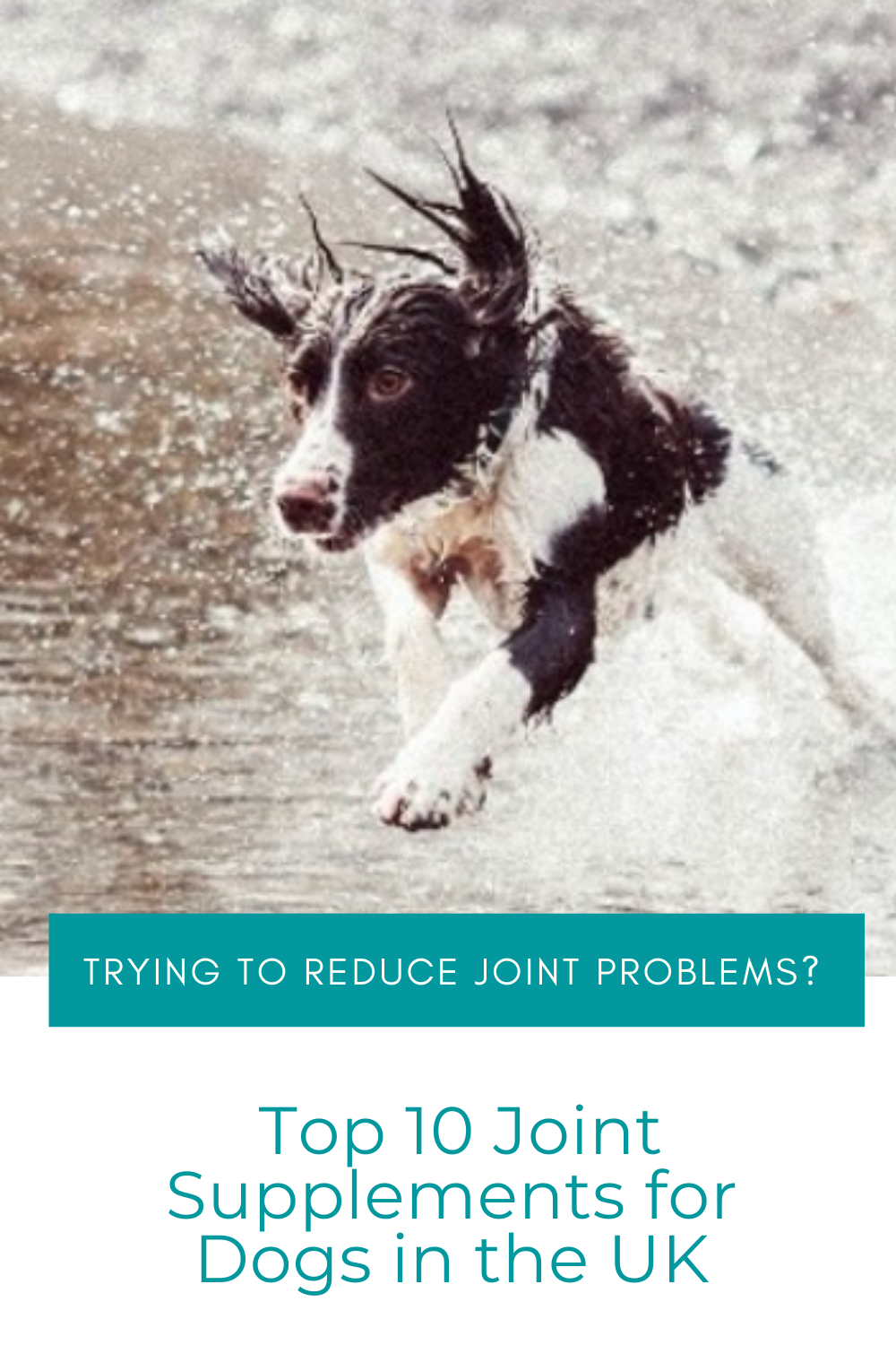 Top 10 Best Joint Supplements For Dogs In 2020 Dog Joint Supplement Dog Supplements Best Dog Supplements