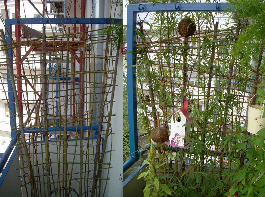 sichtschutz im topf / container aus weide balkon