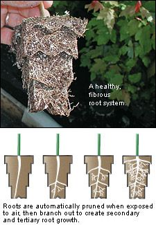 Air Pruning Pots Kit   These Are The Same Rooting Pots Used By Commercial  Nurseries To · Root SystemGarden ...