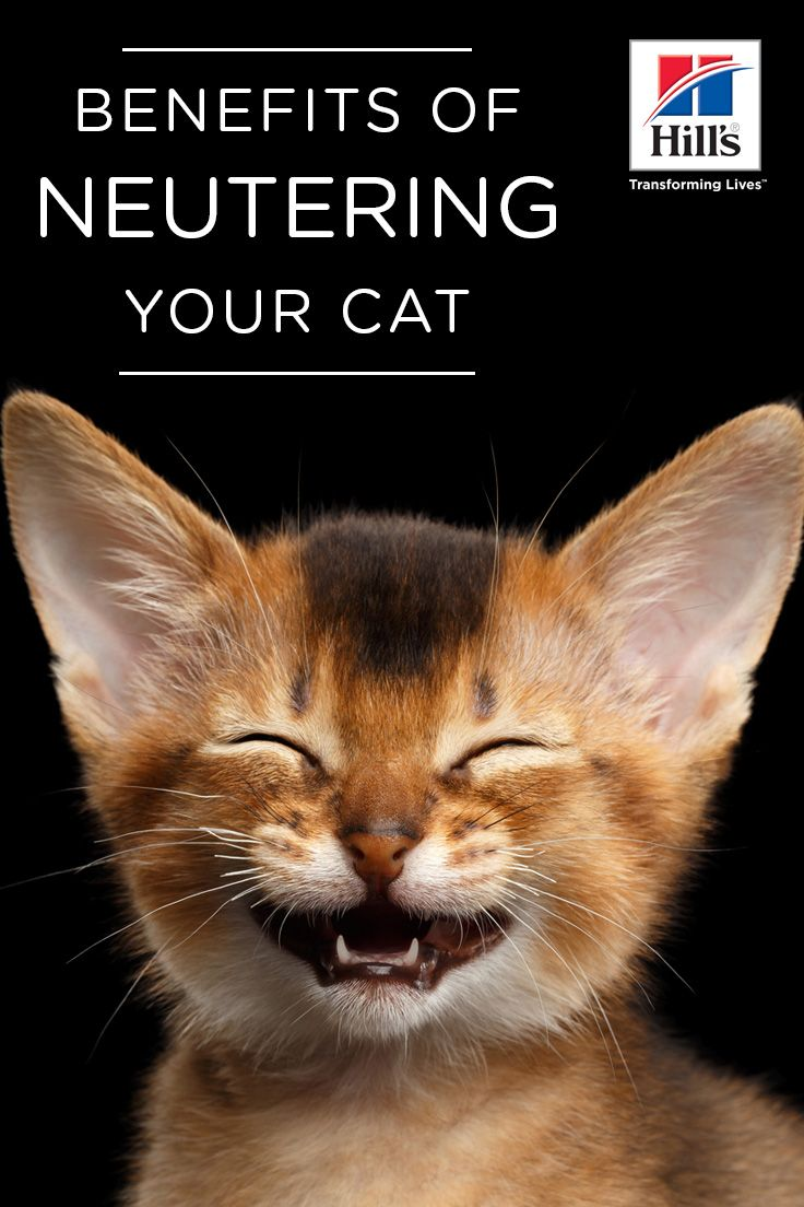 Health Benefits of Spaying or Neutering Your Cat Cats