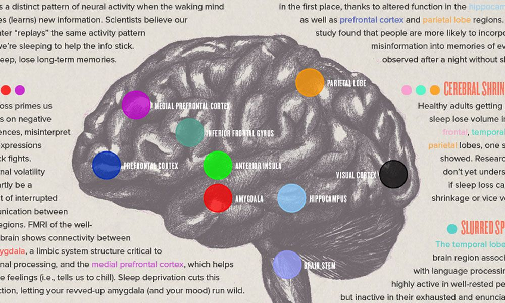 Infographic What Happens To Your Brain When You Don T Sleep