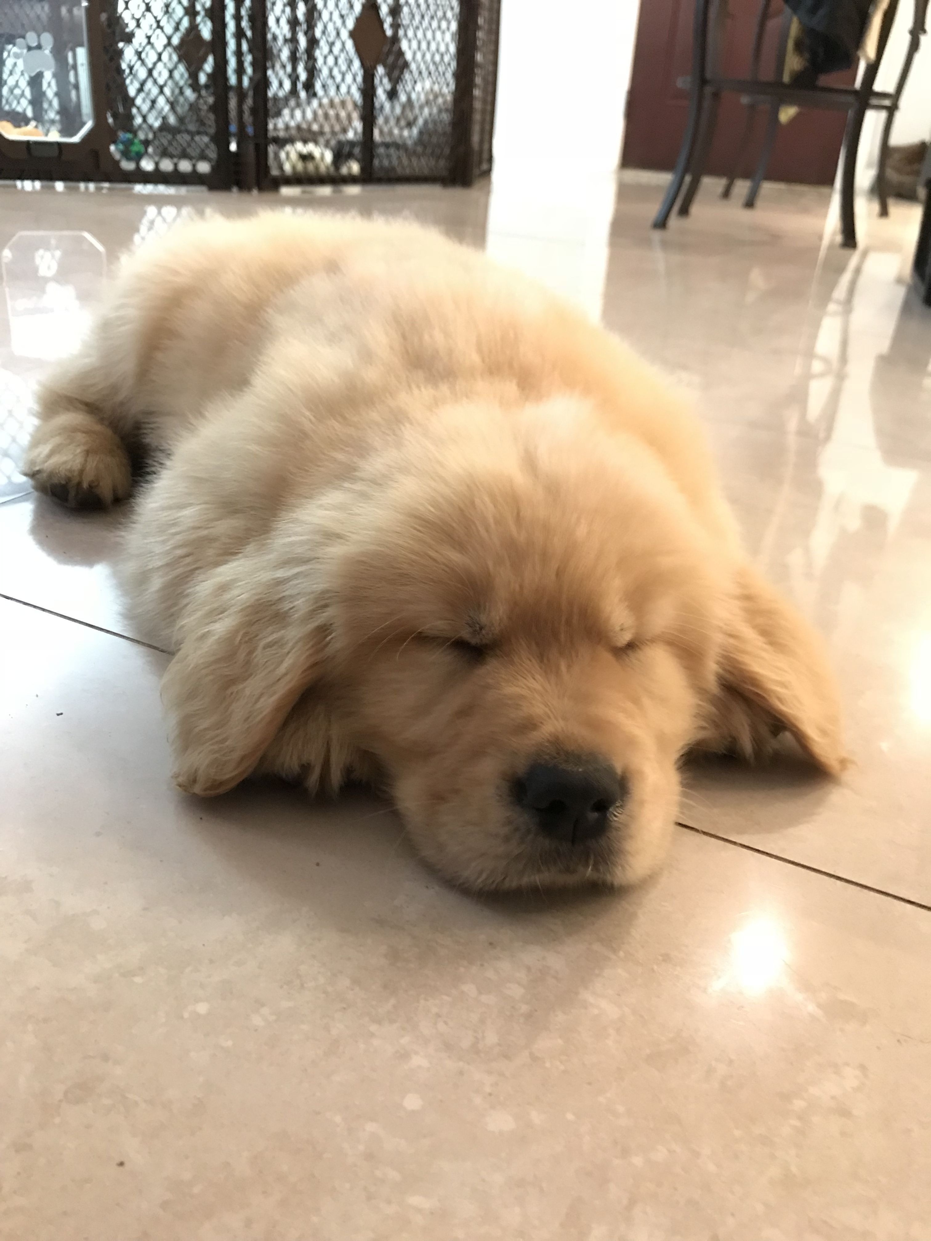 Cute Sleeping Golden Retriever Puppies Wallpaper Baby Animals Pictures Puppies Cute Dogs And Puppies