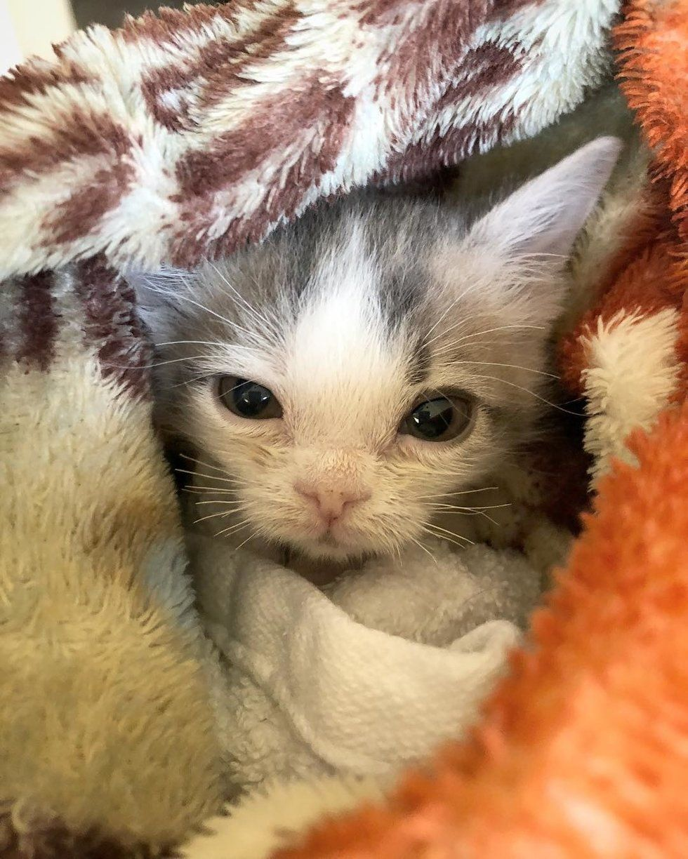 Young Woman Saves Kitten Who Was Found In Dirt While Others Have