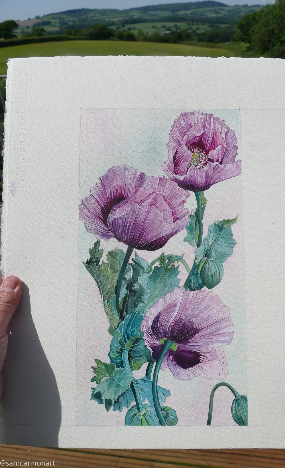 Poppies - all finished. Watercolour on watercolour paper.