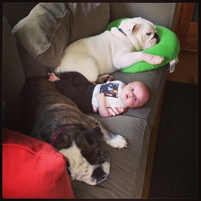 Pin By Gb Michigan Pets On Bulldogs Bulldog Lover Dogs And
