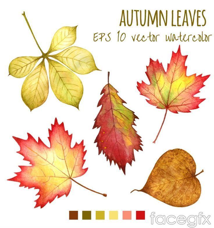 5 Aquarel Herfstblad Ontwerp Vector Watercolor Autumn Leaves Fall Leaves Drawing Watercolor Leaves