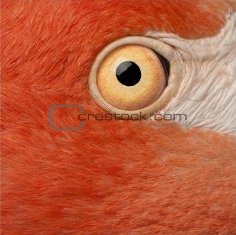 Image 4050643 Flamingo Art Flamingo Animals Beautiful