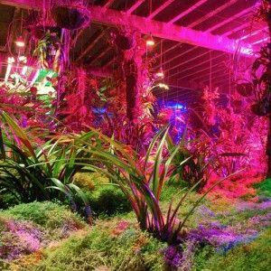 Plant Light Bulbs Home Depot 300x300 Grow Light Home Depot Grow
