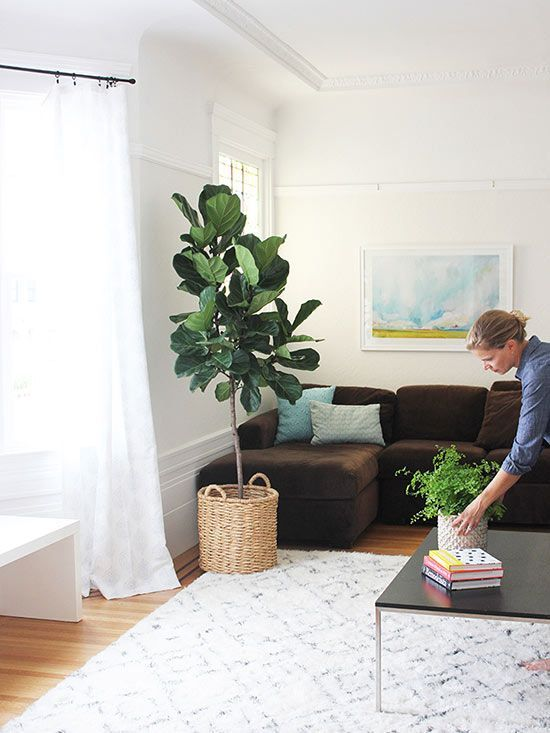 5 Beautiful Ways to Decorate with Fiddle Leaf Fig Trees
