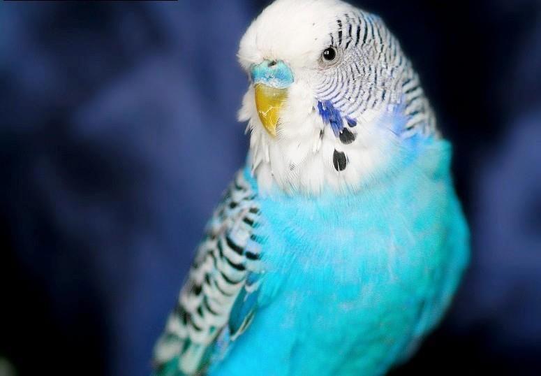 blue hue..