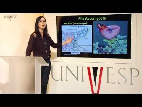 Biologia Geral - Aula 16 - Fungos e suas múltiplas linhagens - YouTube