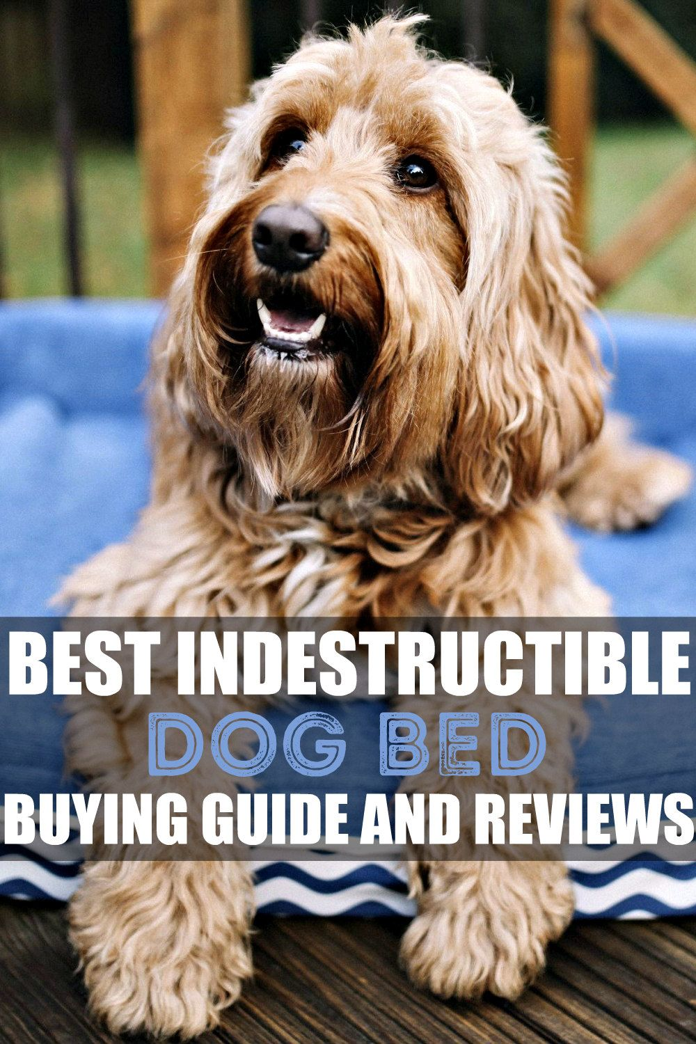 Best Indestructible Dog Bed (January 2020) Buyer's Guide