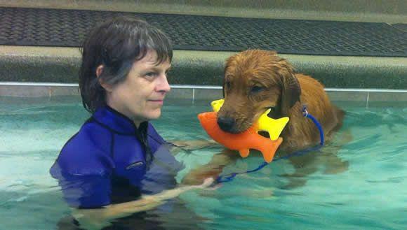 K 9 Pet Therapy Fun Swim Therapy Animals Pets Fun