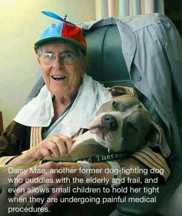What A Wonderful Pic Love My Pittie S Therapy Dogs Dogs