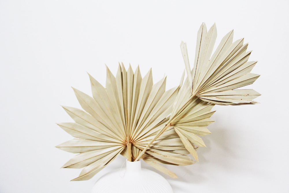 5 x Bleached dried palm fan stems