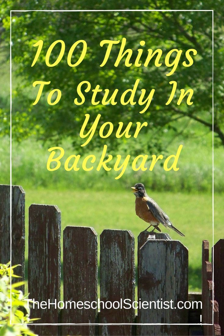100 Things To Study In Your Backyard Nature Study Nature Activities Homeschool