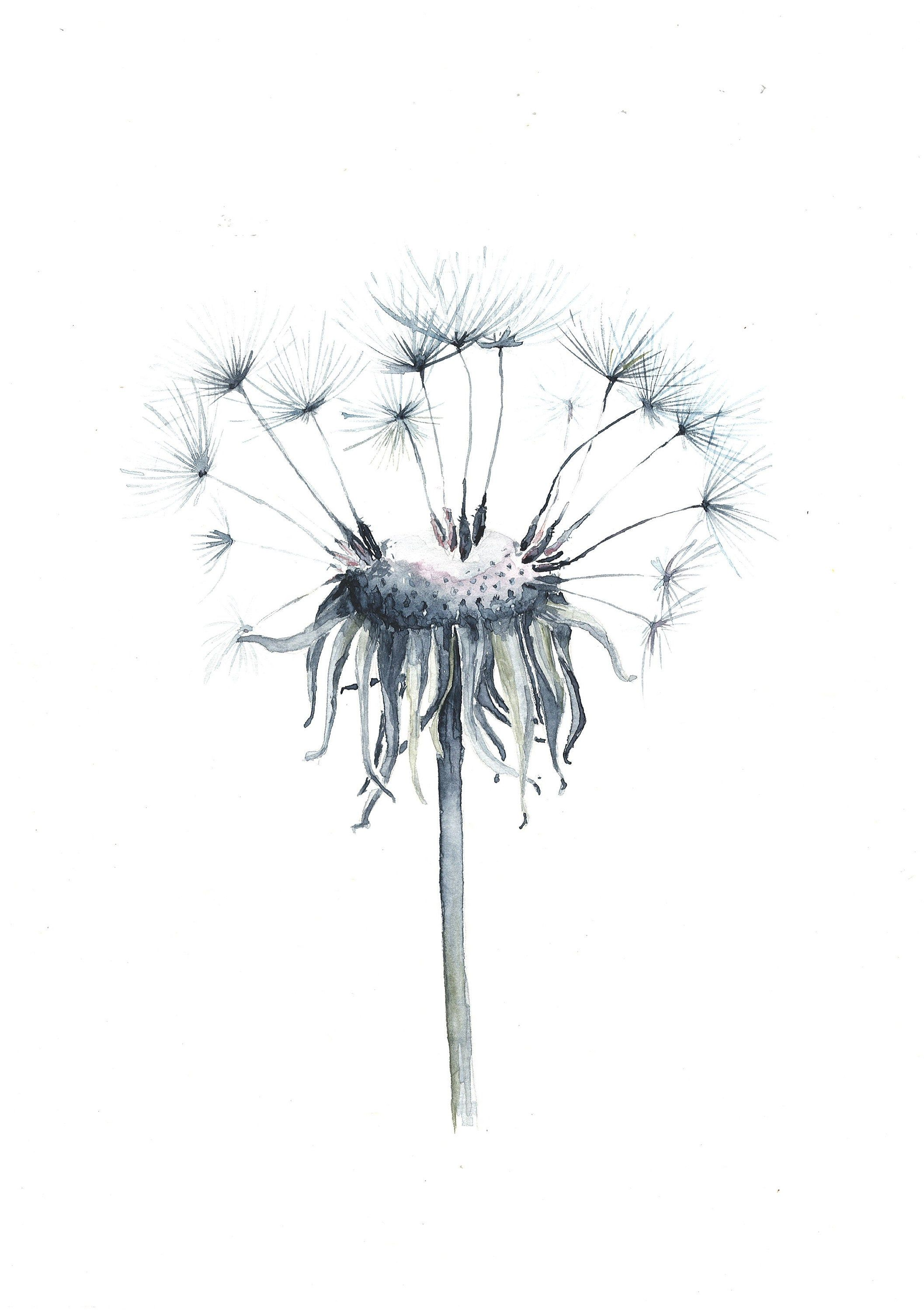 Blow Dandelion Original Botanical Watercolor Painting Etsy In 2020 Watercolor Painting Etsy Watercolor Paintings Dandelion Art