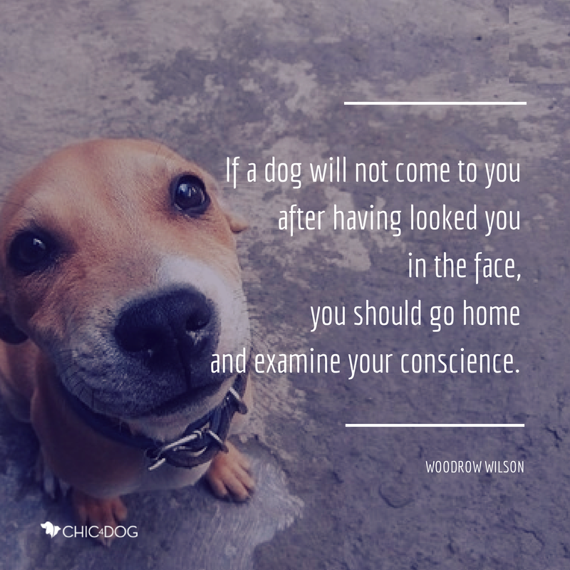 Woodrow Wilson quote - #Chic4Dog #dogquote