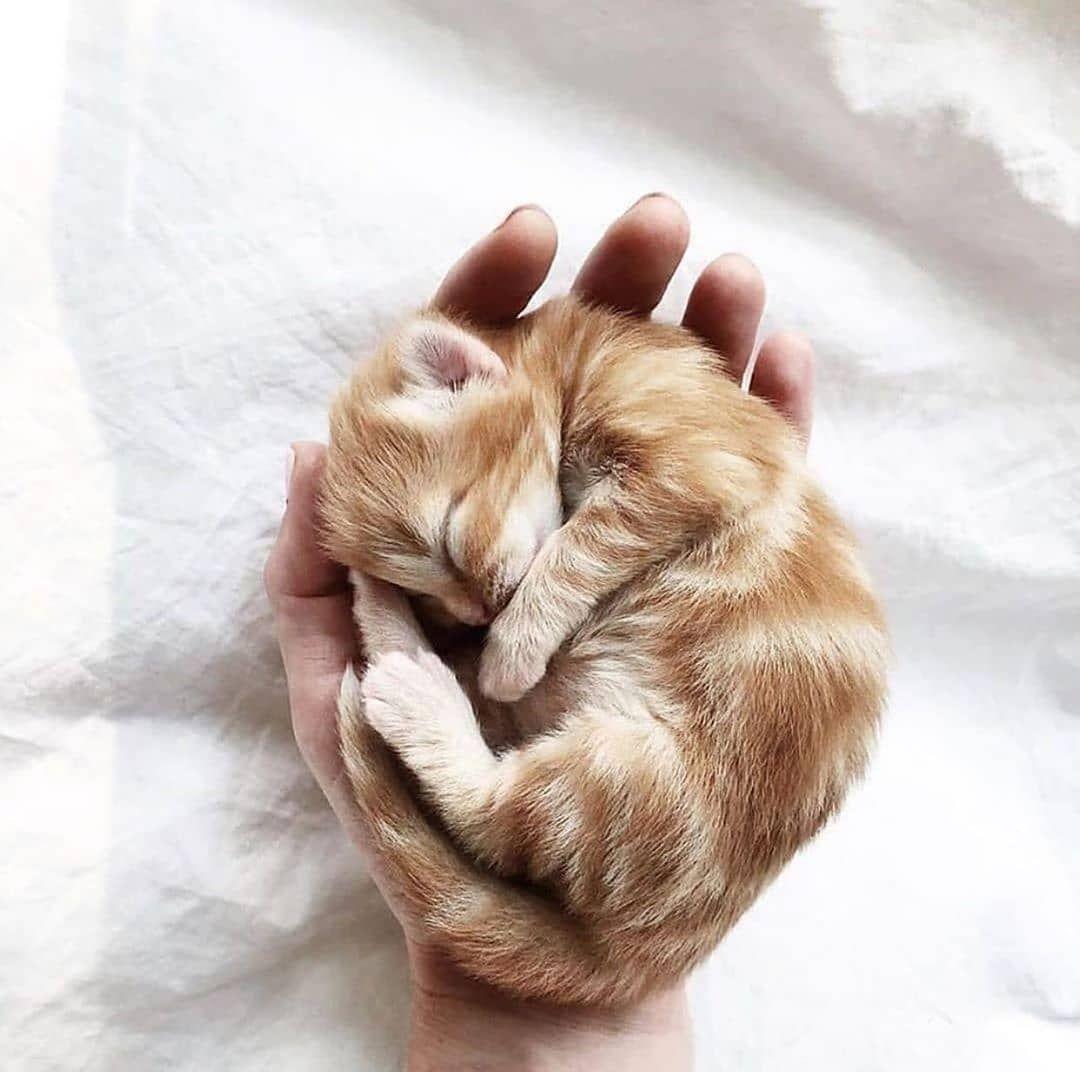 Follow Us Mydreamycats If You Are A Real Cat Lover We Publish Cute Cats Photo And Amazing Videos Zhivotnye Koshki Kot