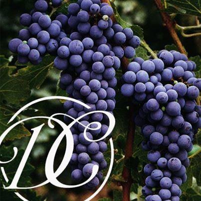 """Hablemos de Vino...  La uva cabernet sauvignon produce lo que los más aficionados consideran el Rolls Royce de los vinos. Esta uva es la variedad predominante en la región vitivinícola de Bordeaux en Francia y también es cultivada en todas las áreas principales que producen uvas para vino. #FestivalQuesoyVino #DeCortezRestaurant #WineandCheeseFestival #ILoveDeCortez"""""""