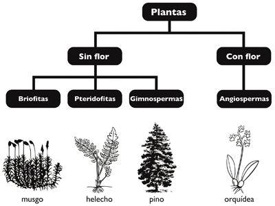 Plantas reproduccion asexual yahoo esports