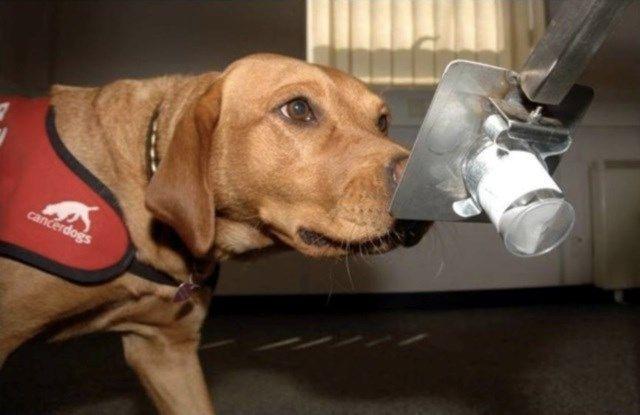 5 coisas que os cães são capazes de detectar através do faro - Mega Curioso