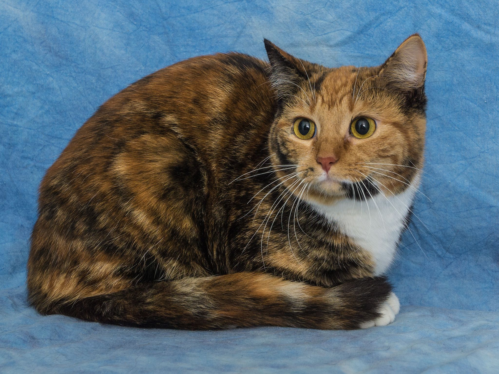 Goldie Found Her Foreverhome On 01 23 14 Congrats Goldie Opt2adopt Livessaved Humane Society Animals Pets