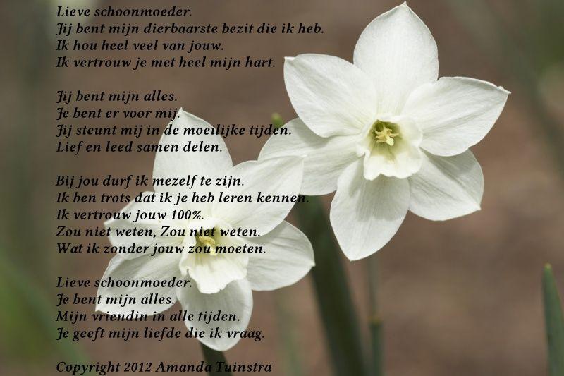 Gedicht Mijn Schoonmoeder