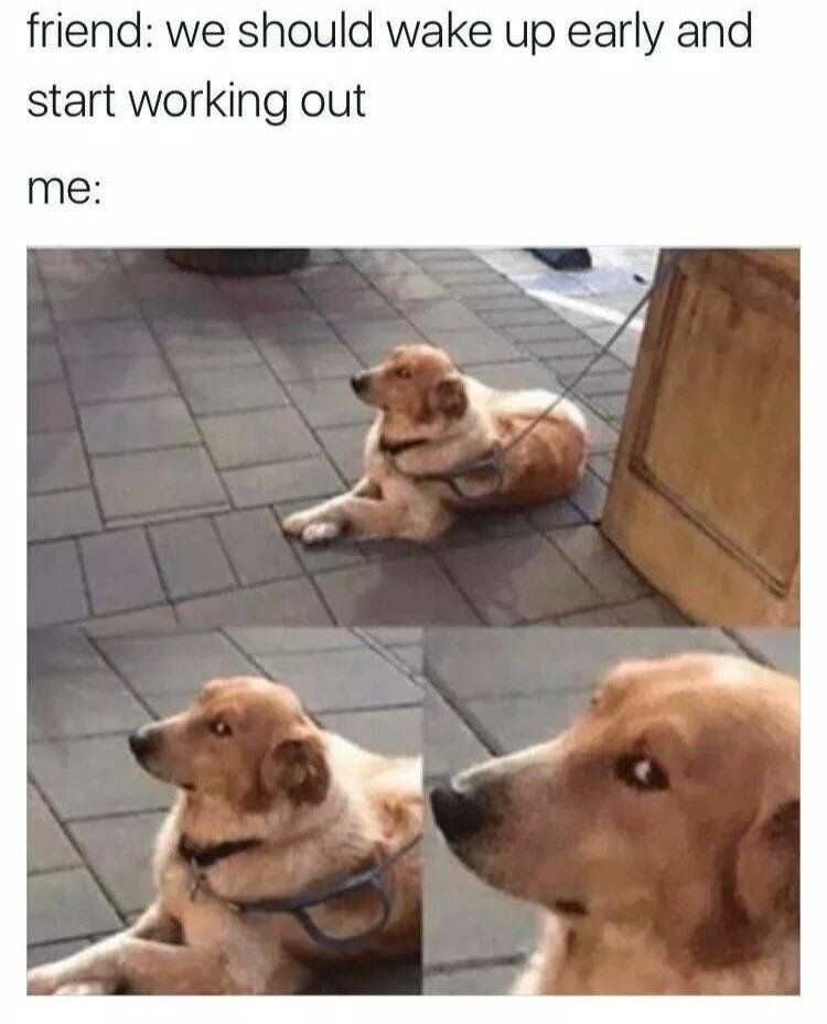 Surely You Joke Zoom Meme Joke Surely Https Putmelike Com Surely You Joke Animal Memes Funny Animals Funny Dog Memes