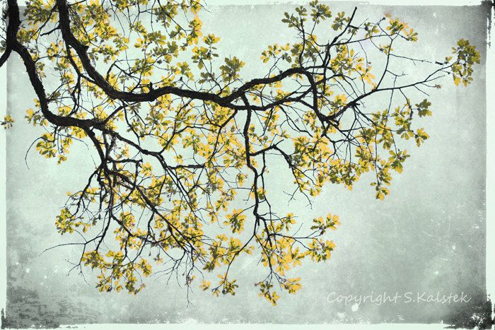 Yellow Photography Tree Wall Art Mustard by KalstekPhotography, $33.00