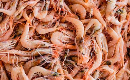 Costco Faces Lawsuit Over Slavery In Prawn Supply
