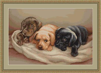 Labrador Cross Stitch Kit Psi Pinterest Cross Stitch Stitch A