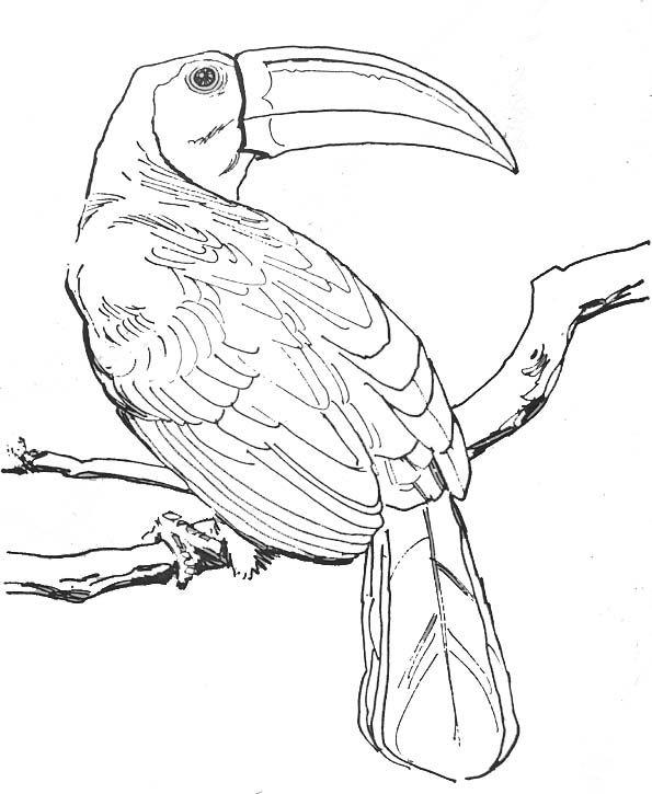Coloriage oiseaux exotiques colorier dessin imprimer - Dessin d oiseau a imprimer ...