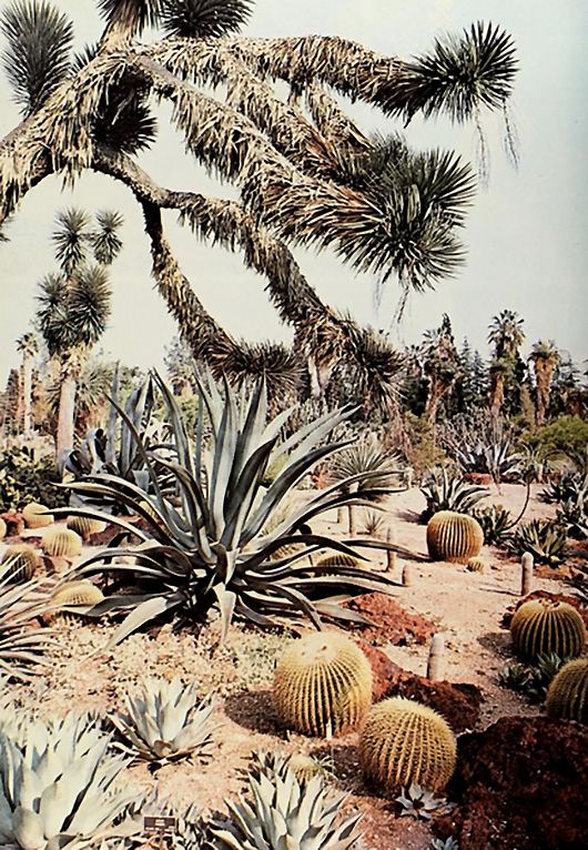 desert-bound birthday. #desertlife