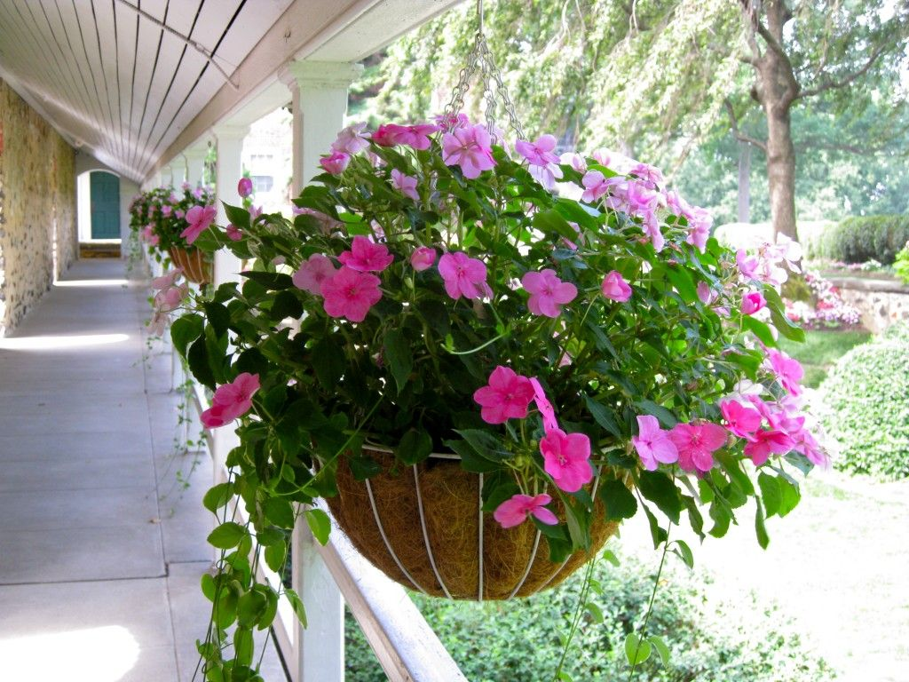 Impatient And Trailing Vinca Fines Hanging Basket For Front Porch