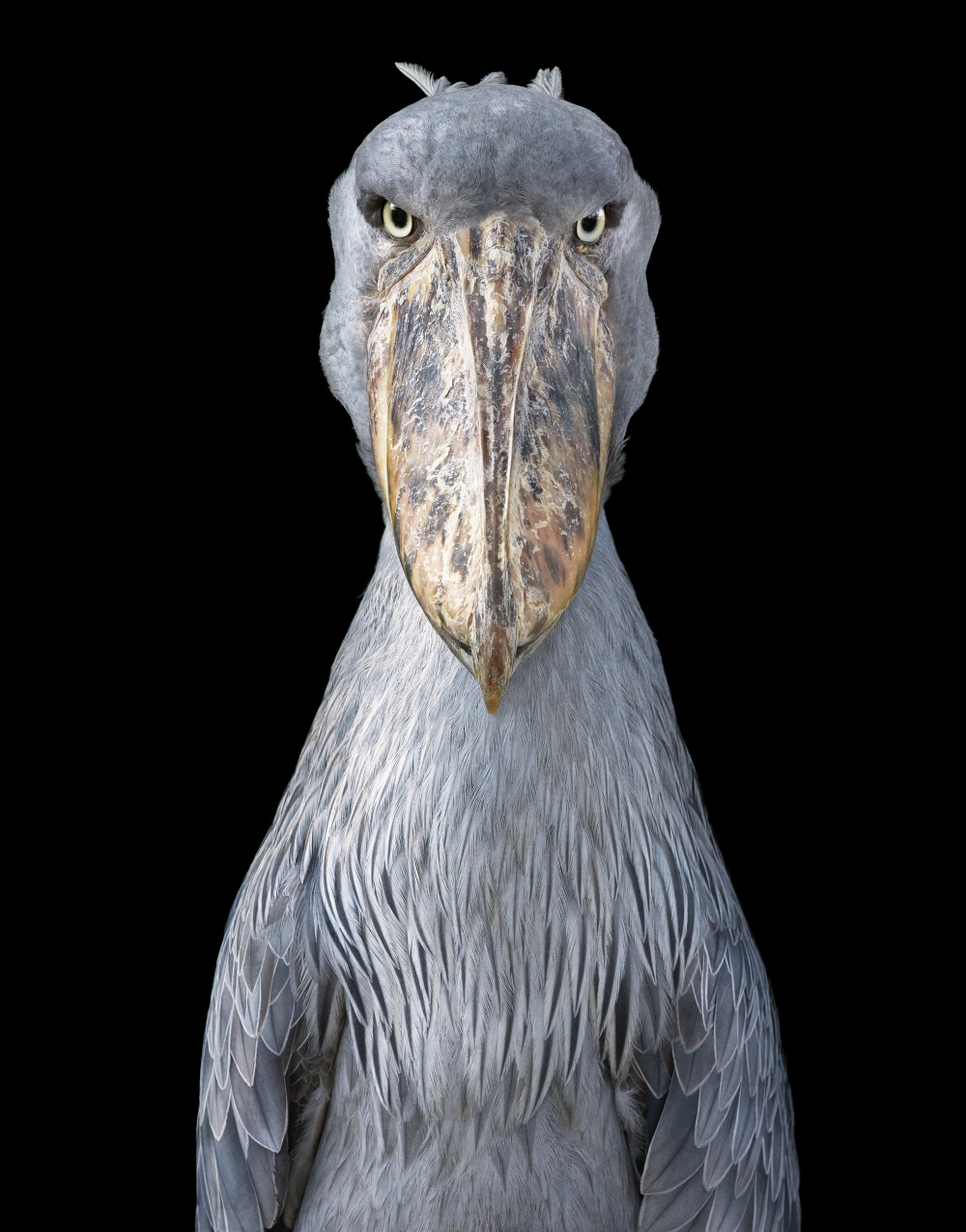 Photographer Tim Flach Highlights Unusual and Endangered