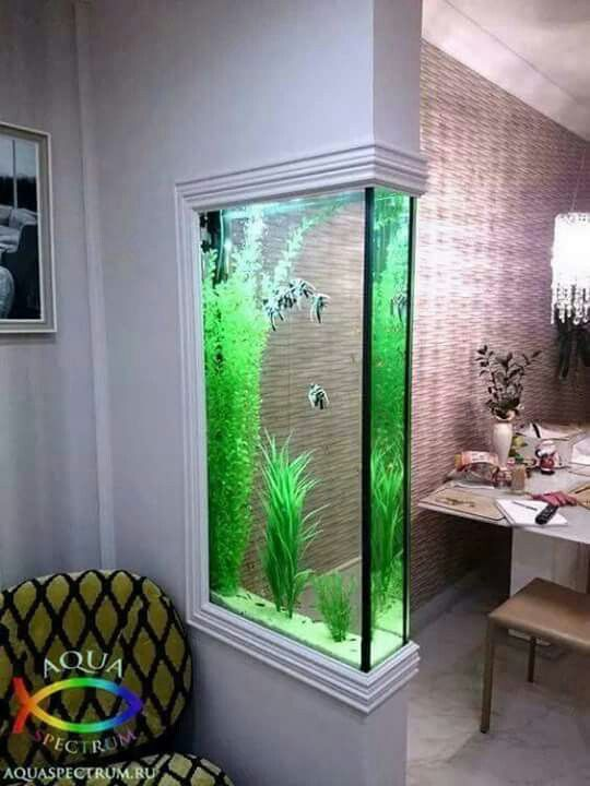 Built In Wall Aquarium