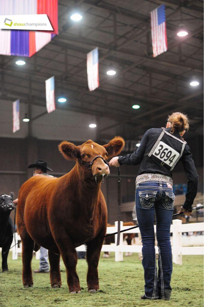Senior and Grand Champion Boer Goat Ram   Shows