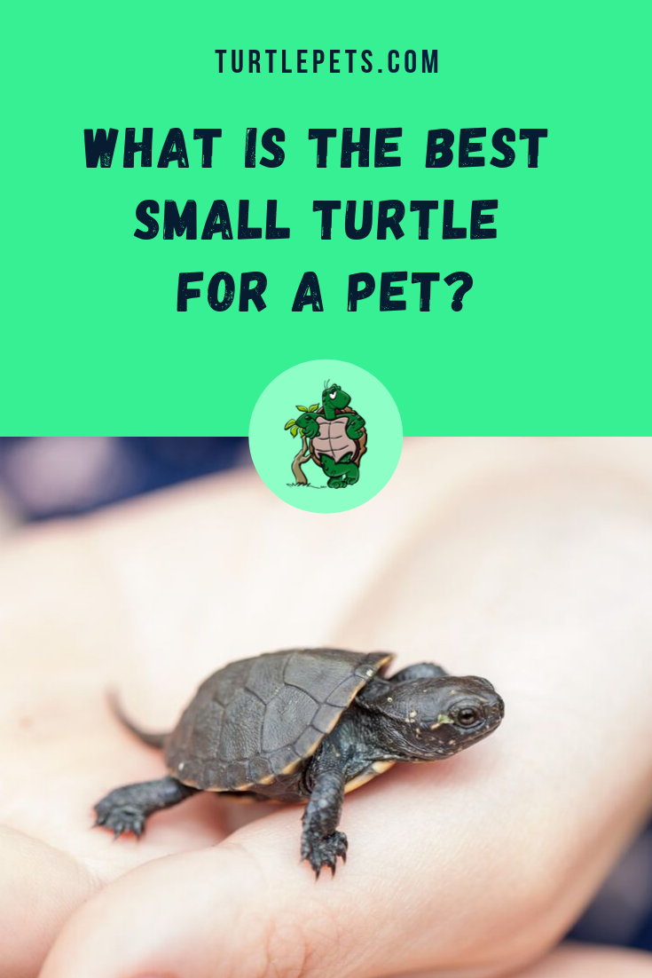 What Is The Best Small Turtle For A Pet Tiny Turtle Pets Turtlepets In 2020 Small Turtles Small Pet Turtles Tiny Turtle